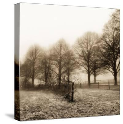 Fence Row and Trees-Harold Silverman-Stretched Canvas Print