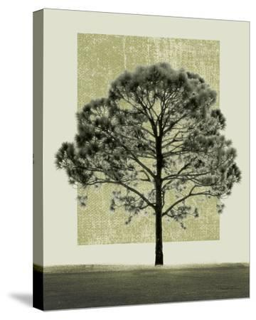 Natures Shapes I-Harold Silverman-Stretched Canvas Print