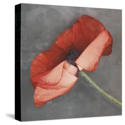 Rouge-Erin Clark-Stretched Canvas Print