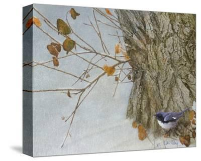 Late Snow Warbler-Chris Vest-Stretched Canvas Print