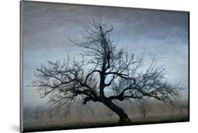 Farm House Tree-David Winston-Mounted Giclee Print