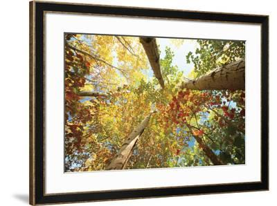 Forest Canopy-Michael Hudson-Framed Art Print