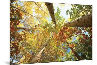 Forest Canopy-Michael Hudson-Mounted Art Print