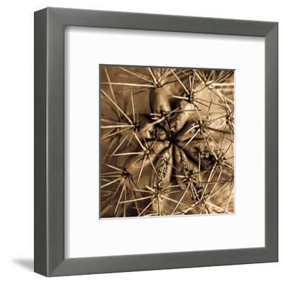 Cactus-Jean-Fran?ois Dupuis-Framed Art Print