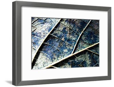 Veined leaf II-Jean-Fran?ois Dupuis-Framed Art Print