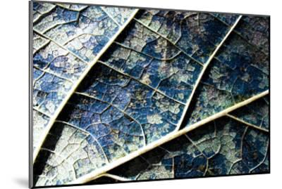 Veined leaf II-Jean-Fran?ois Dupuis-Mounted Art Print