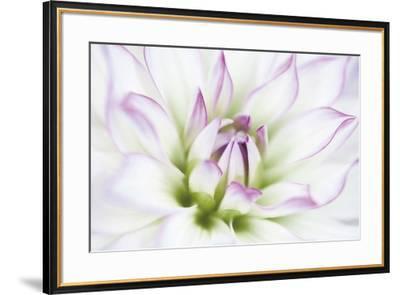 Dahlia-Dawn LeBlanc-Framed Art Print