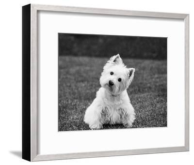 Winnie-Kim Levin-Framed Art Print