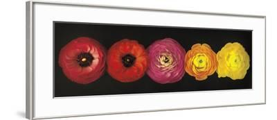 Ranunculus-Assaf Frank-Framed Art Print