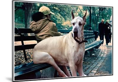 Great Dane on Central Park Bench NYC--Mounted Poster