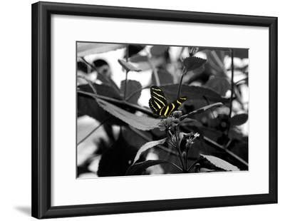 Butterfly at Bronx Zoo--Framed Poster