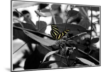 Butterfly at Bronx Zoo--Mounted Poster