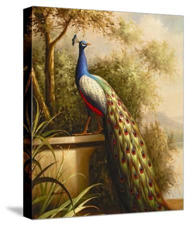 Regal Peacock--Stretched Canvas Print