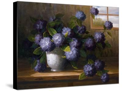 Hydrangea Blossoms II-Welby-Stretched Canvas Print