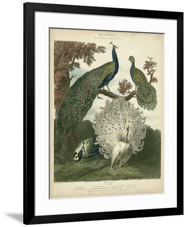 Peacock Gathering-Sydenham Teast Edwards-Framed Giclee Print