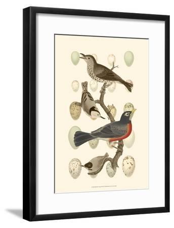 British Birds and Eggs III--Framed Art Print