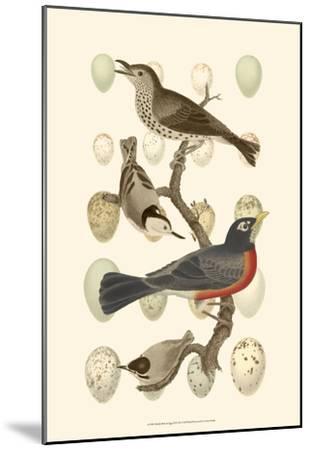 British Birds and Eggs III--Mounted Art Print