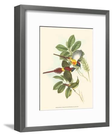 Small Birds of Tropics III-John Gould-Framed Art Print