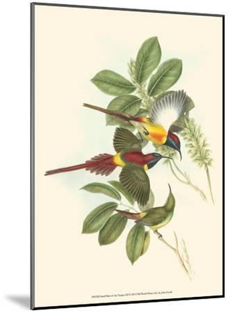 Small Birds of Tropics III-John Gould-Mounted Art Print
