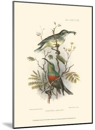 Birds in Nature I-J^C^ Keulemans-Mounted Art Print
