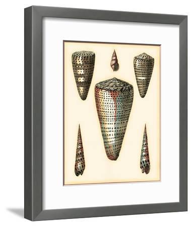 Redoute Shells II-Pierre-Joseph Redout?-Framed Art Print