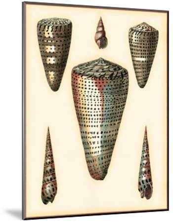 Redoute Shells II-Pierre-Joseph Redout?-Mounted Art Print