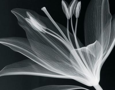 Lilium Glow-Hugh Turvey-Framed Giclee Print