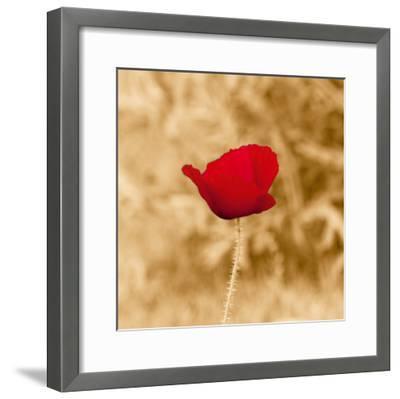 Poppy Solo-Joseph Eta-Framed Giclee Print