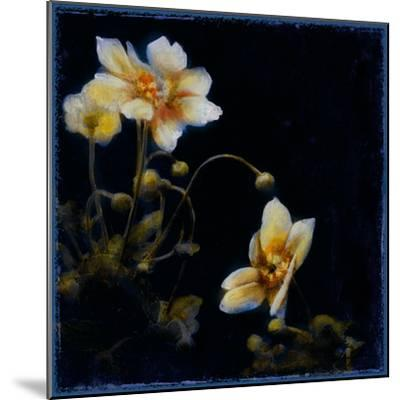 Midsummer Night Bloom III-Douglas-Mounted Giclee Print