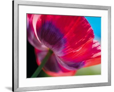 Radiant Poppy I-Ella Lancaster-Framed Giclee Print
