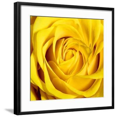 Yellow Rose-Joseph Eta-Framed Giclee Print