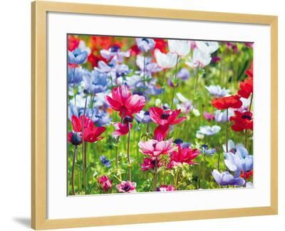 Summer Blush-Ella Lancaster-Framed Giclee Print