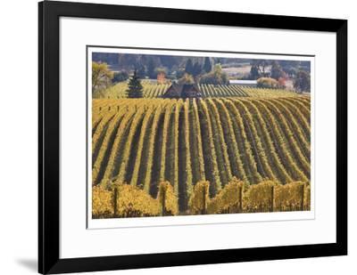 Oregon Vineyard-Donald Paulson-Framed Giclee Print