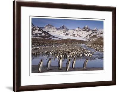 Penguin Colony-Donald Paulson-Framed Giclee Print