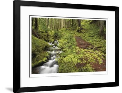 Stream And Forest Path-Donald Paulson-Framed Giclee Print