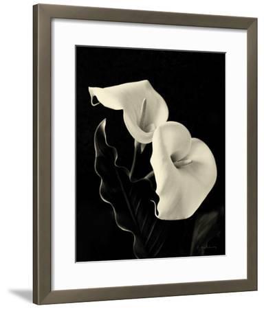 Botanical Elegance Calla IV-Amy Melious-Framed Art Print