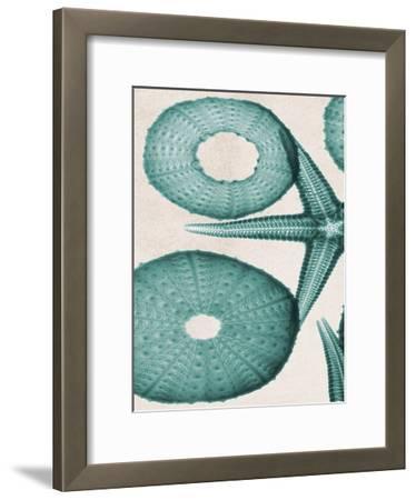 Under The Sea 2-Albert Koetsier-Framed Art Print