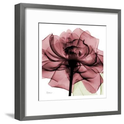 Chianti Rose-Albert Koetsier-Framed Art Print