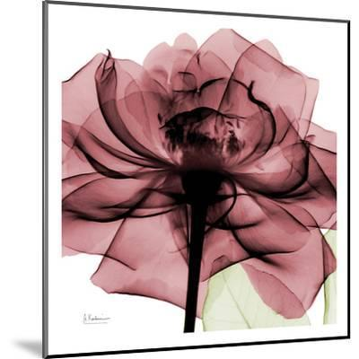 Chianti Rose-Albert Koetsier-Mounted Art Print