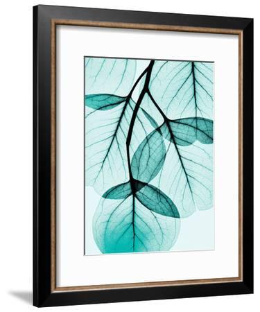 Teal Eucalyptus-Albert Koetsier-Framed Art Print
