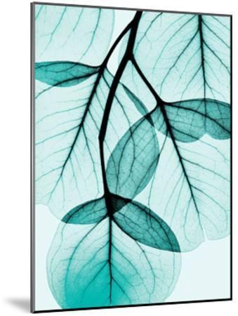 Teal Eucalyptus-Albert Koetsier-Mounted Art Print
