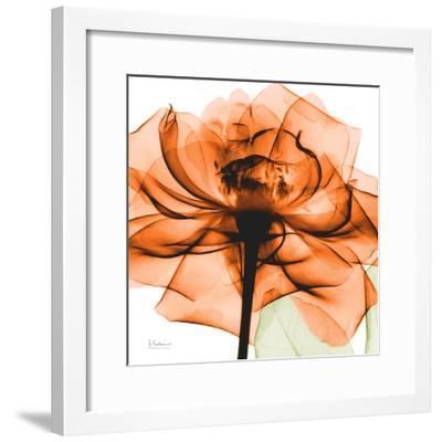 Orange Rose-Albert Koetsier-Framed Art Print