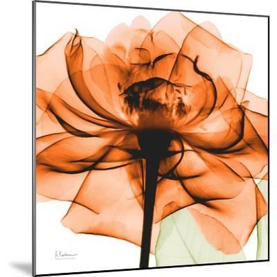 Orange Rose-Albert Koetsier-Mounted Art Print