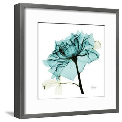 Teal Rose 2-Albert Koetsier-Framed Art Print