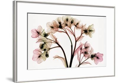 Hellebore 2-Steven N^ Meyers-Framed Giclee Print