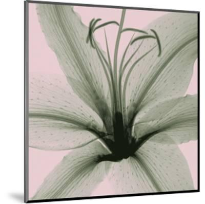 Lily-Steven N^ Meyers-Mounted Giclee Print