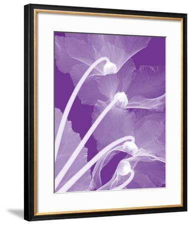 Cyclamen/White-Steven N^ Meyers-Framed Giclee Print