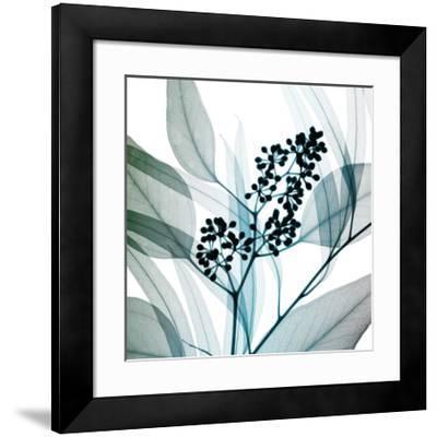 Eucalyptus-Steven N^ Meyers-Framed Giclee Print