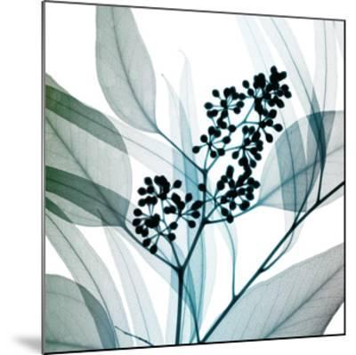 Eucalyptus-Steven N^ Meyers-Mounted Giclee Print