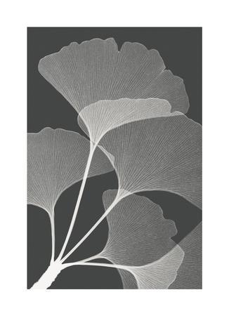 Gingkos II-Steven N^ Meyers-Framed Giclee Print